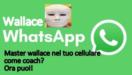 Wallace Whatsapp Coach