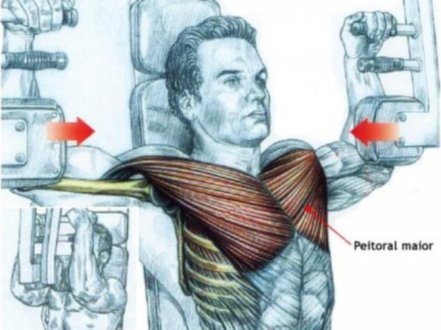 Pectoral Machine ? petto interno!
