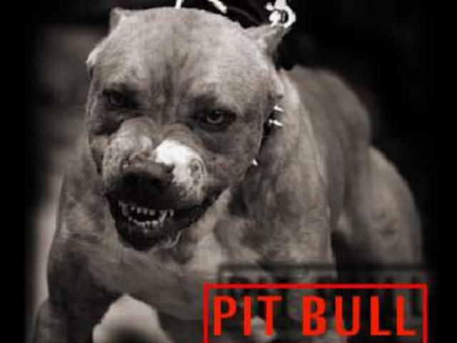 pit bull teoria master wallace (super fisico docet)